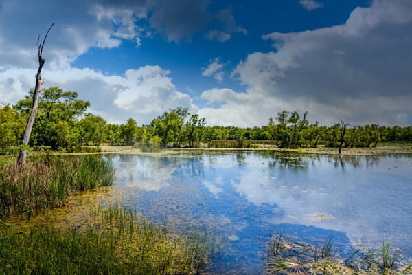 Brazos Bend Sunny Afternoon, Limited Edition, Landscape, Fine Art Photograph On Acrylic Or Metal Photography Art | Beth Sheridan Photography
