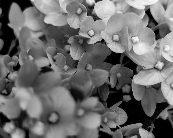 Summer In Black And White Photography Art | Tamea Travels