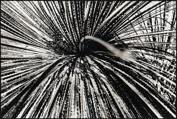 Plant Art | Jared Pava Art