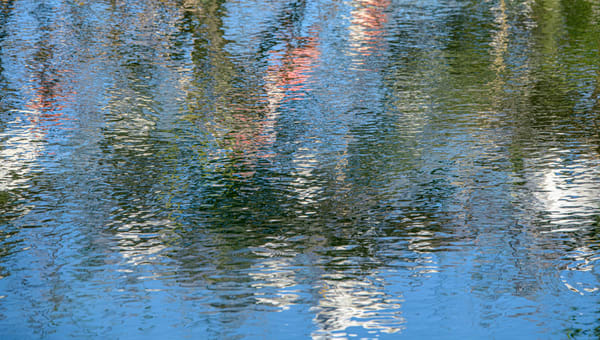 Reflections of Nature, flora, fauna and birds in water