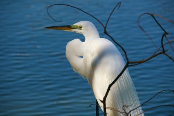 Birds in Coastal Lands
