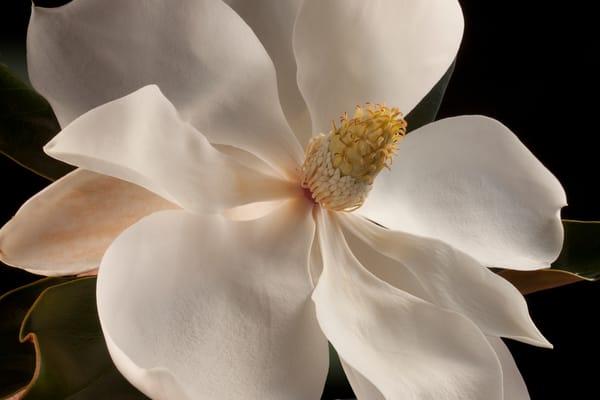 Magnolia, Houston, Texas Photography Art | Rick Gardner Photography