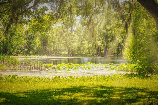 Texas Pond On A Sunny Afternoon Limited Edition Photography Art | Beth Sheridan Photography