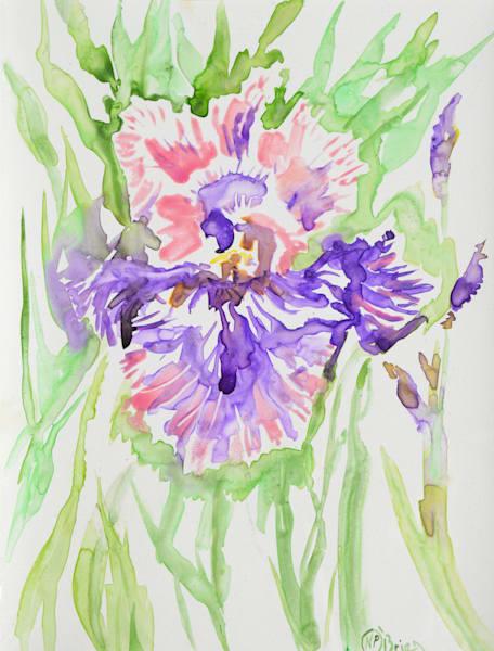"Original Watercolor, ""Show Off"" Art | Color Splash Ranch"