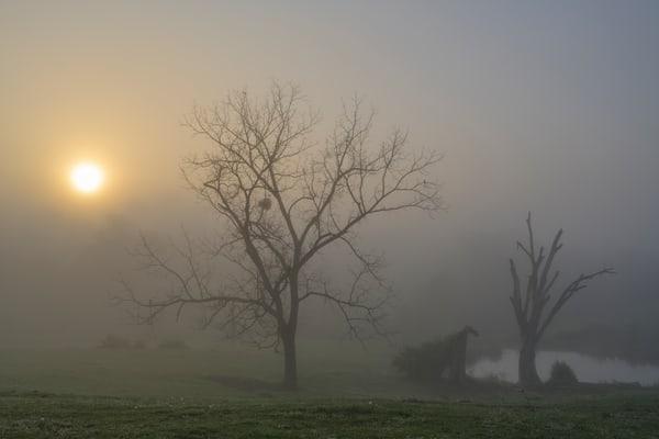 Estill Sunrise 8146full