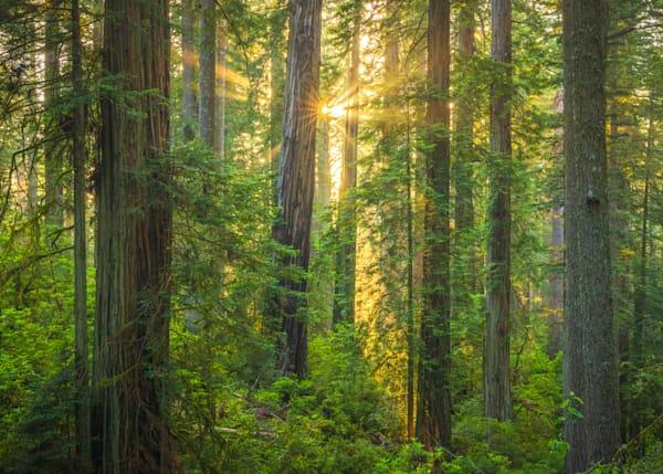 Redwoods Lost Coast Sunset
