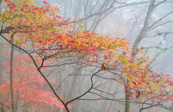 Fall Trees 2397