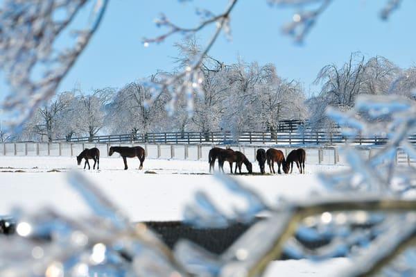 Storm Horses 1505 11