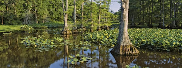 Reelfoot National39 Photography Art   Jeff Rogers Photography, Inc.
