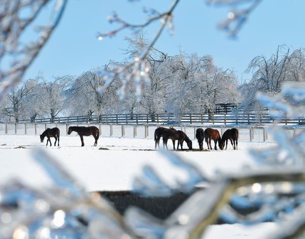 Snow Horses1505 11x14 Photography Art | Jeff Rogers Photography, Inc.