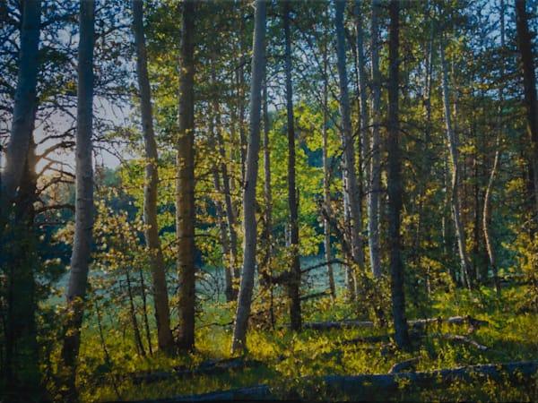 Morning, Aspen Forest