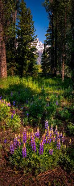 Alpine Enchantment 12x30 Photography Art   McKendrick Photography