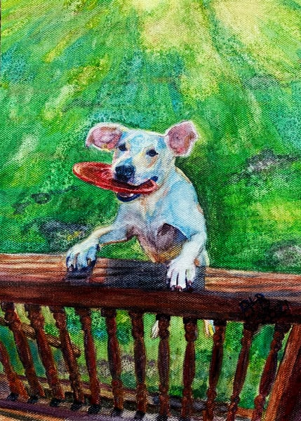 Pets and Portraits