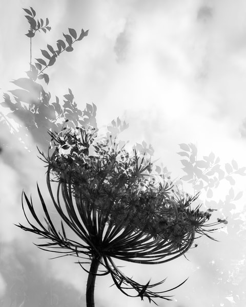 Dancing With The Clouds  Photography Art | Tamea Travels
