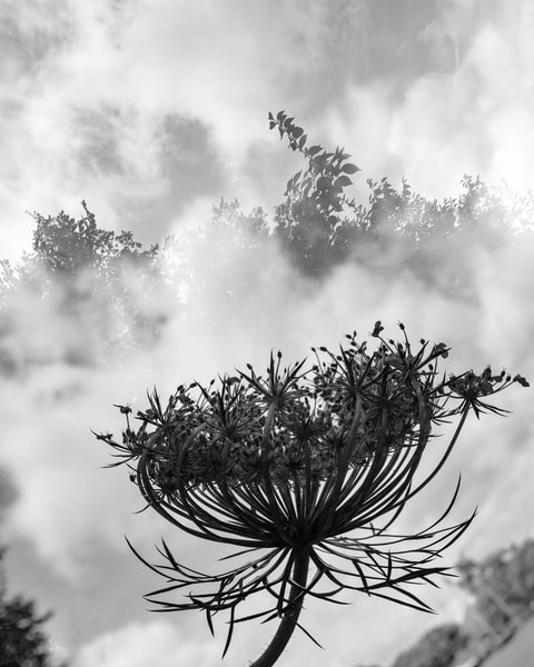 Fog To The Clouds Photography Art | Tamea Travels