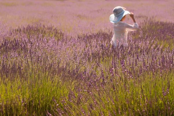 Angelina In Lavender Photography Art | nancyney