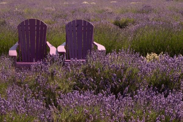 Lavendar Chairs Photography Art | nancyney