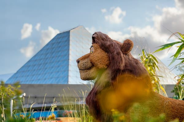 Mufasa Topiary At Epcot Photography Art | William Drew Photography