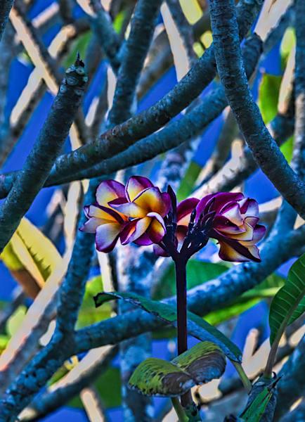 Mangrove Delight Photography Art   Monty Orr Photography