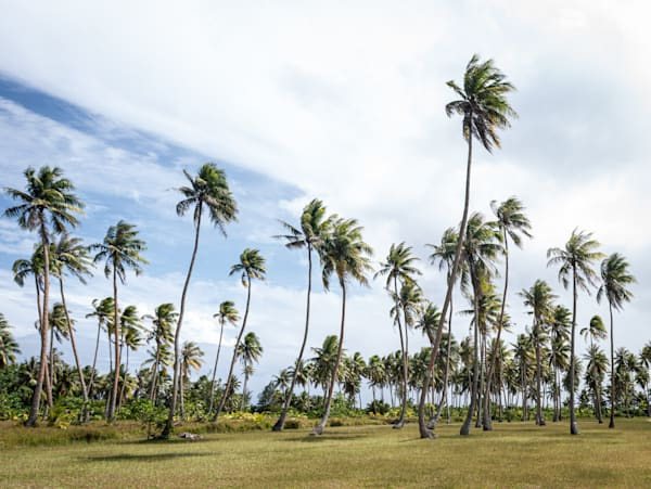 Palms In Paradise ( Color )  Photography Art | Visual Arts & Media Group Corporation