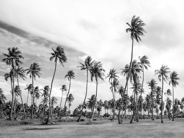 Palms In Paradise ( Black & White )  Photography Art | Visual Arts & Media Group Corporation