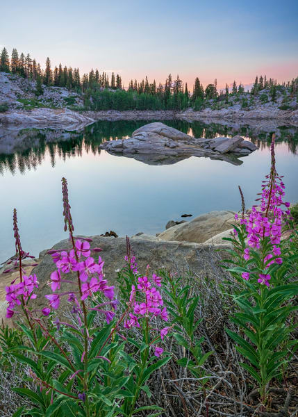 fireweed wildflowers at lake mary