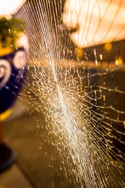 Cracking Up Photography Art | Ron Olcott Photography