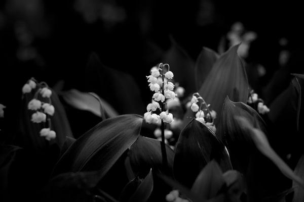 Asf 20190518 9287 M Photography Art | AnamariaSetti.art Photography