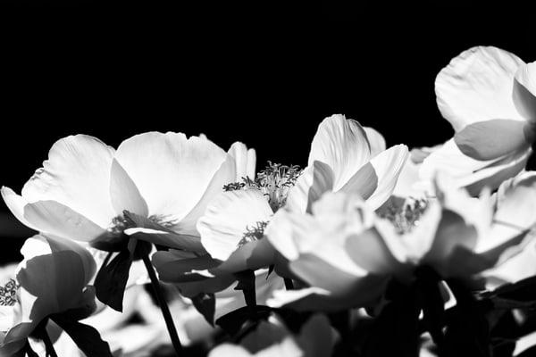 Asf 20190518 9425 M Photography Art | AnamariaSetti.art Photography