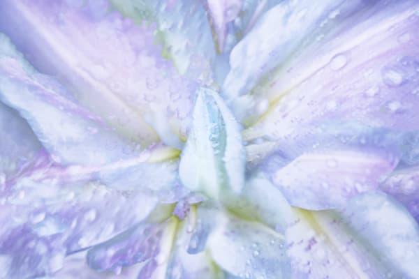 Garden Lilies 3 Art | KJ's Studio