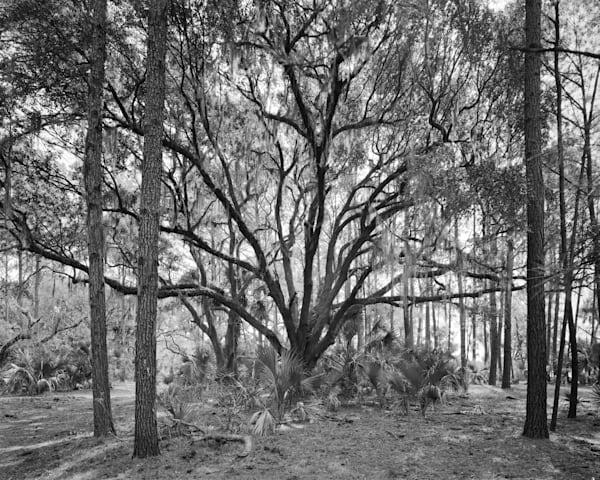 Oak Tree, Ossabaw Island, Georgia Photography Art | Rick Gardner Photography