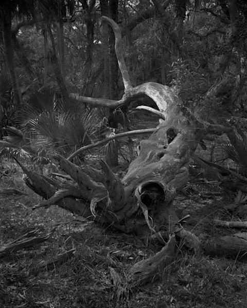 Fallen Tree, Ossabaw Island, Georgia Photography Art | Rick Gardner Photography