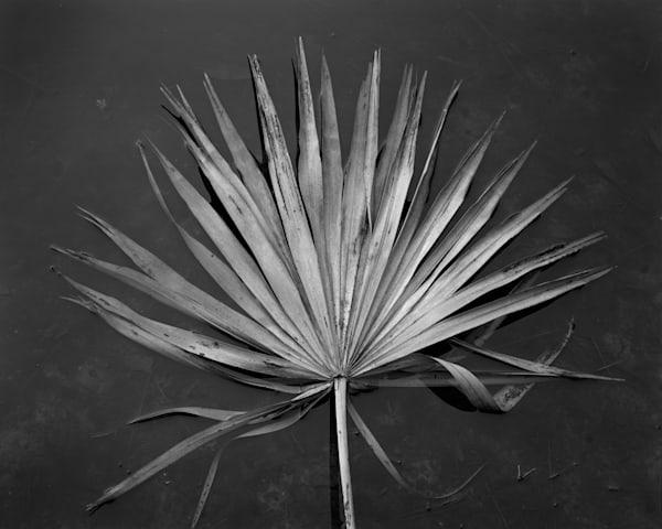 Floating Palmetto Leaf, Ossabaw Island, Georgia Photography Art | Rick Gardner Photography