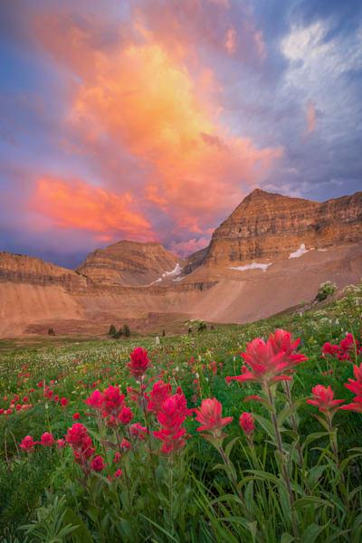timpanogos wildflower sunset vertical summer 2021