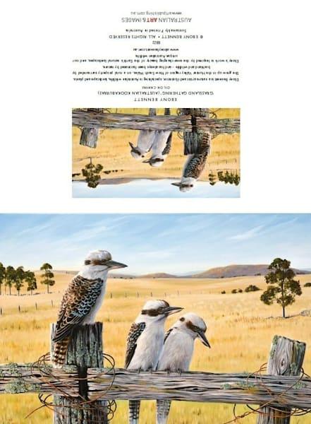 Grassland Gathering - Kookaburras