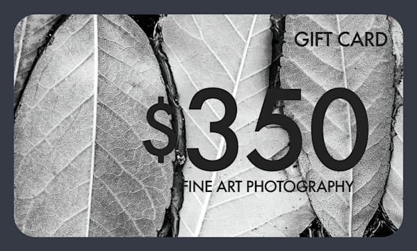 $350 Gift Card   Justin Mikkelsen Photography, LLC