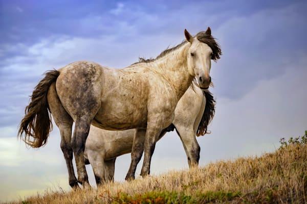 Wild Horses | Shop Photography by Rick Berk