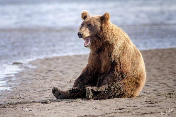 Lazy Bear Beach Day