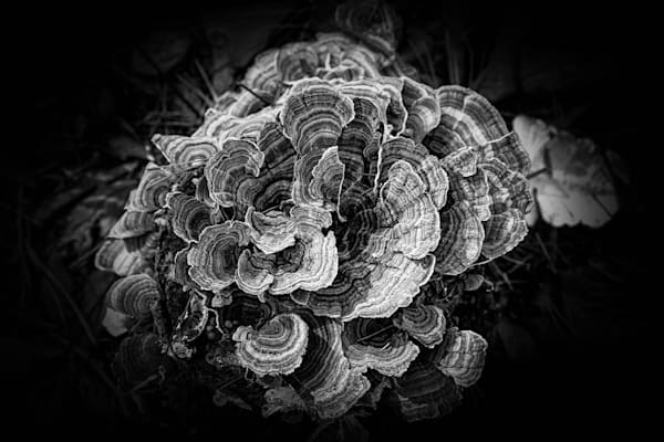 Turkey Tail 5 is a photograph by Y. Hope Osborn.