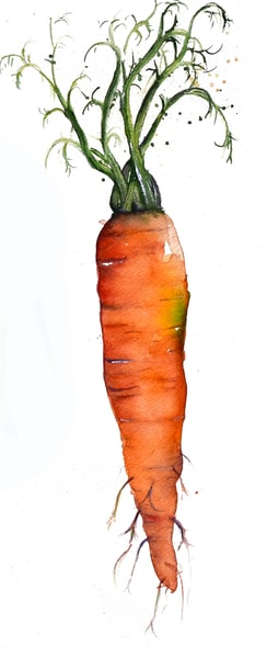 Carrot In A Series Art   Drivdahl Creations