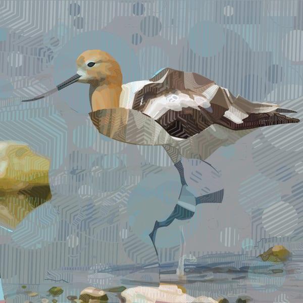 American Avocet Bird wall art and photographs by algorithmic artist Peter McClard