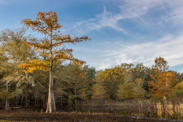Autumn At Rest Photography Art | Visions By Dan McCarthy