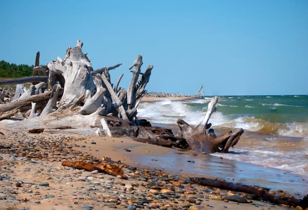Driftwood Forest Whitefish Point