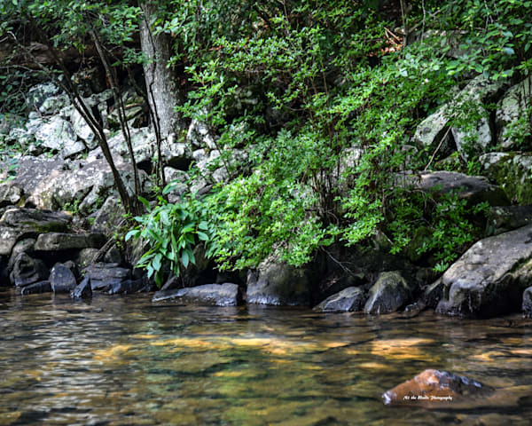 Foster Falls Shoreline Photography Art | N2 the Woods Photography - Nature and Wildlife Artwork