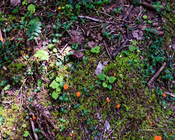 Orange Mushroom Photography Art | N2 the Woods Photography - Nature and Wildlife Artwork
