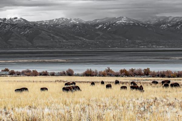 Meadow Photography Art | Elton Pride Photography LLC