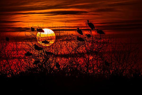Evening Still Photography Art | Elton Pride Photography LLC
