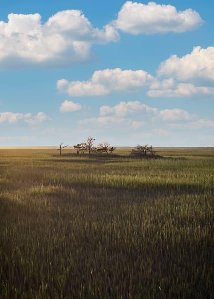 Carolina Marsh Photography Art | TERESA BERG PHOTOGRAPHY