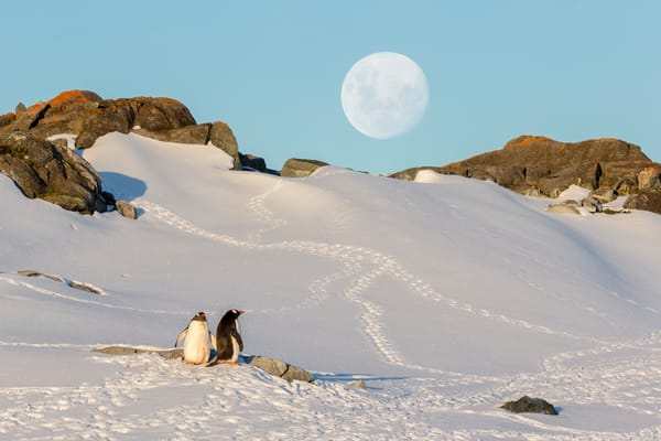 Moonrise Above The Penguin Colony E7 T6992 Petermann Island Antarctica Photography Art | Clemens Vanderwerf Photography