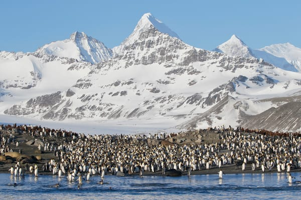 King Penguins At Beach With Mountains E7 T2168 St Andrews Bay Entrance South Georgia Islands Southern Ocean Photography Art | Clemens Vanderwerf Photography